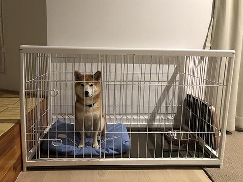 ペットと泊まれるホテルは初体験!8