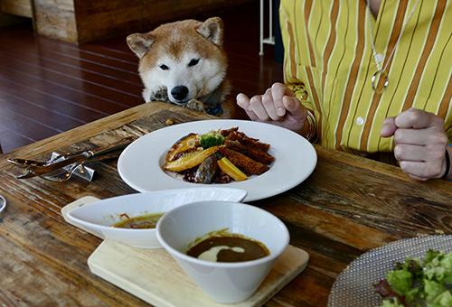 ランチもお土産も軽井沢ならではの地元野菜を4