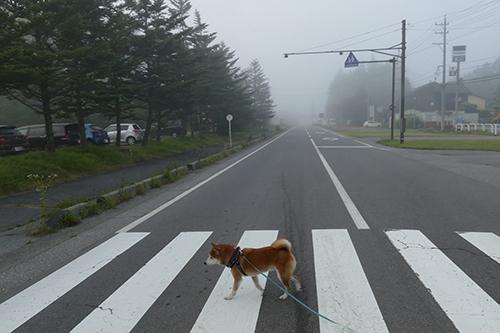 2日目の軽井沢は朝5時半過ぎのお散歩からスタート