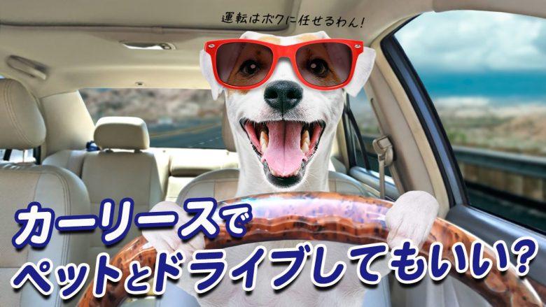 カーリースの車にペットは乗せていいの?注意点とドライブのコツを解説